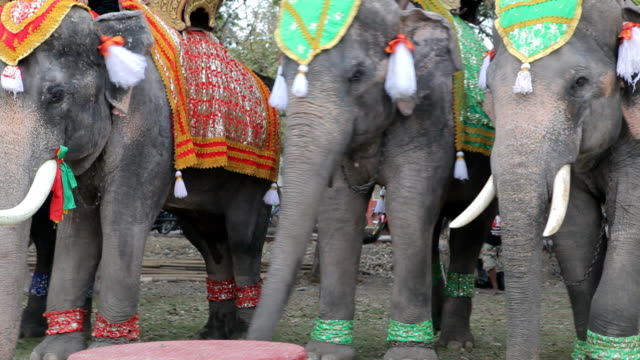 Decorated elephant at the annual elephant festival