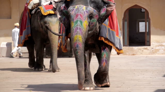 decorated elephants in amber fort jaipur india - india tourism stock videos and b-roll footage