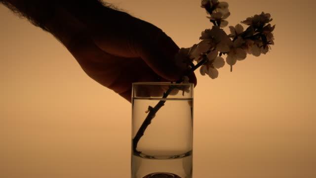 vídeos y material grabado en eventos de stock de florero de cristal decorativo con sesión de estudio de flor - decoración objeto
