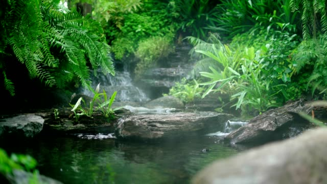 decorative pond with fountain and gold fish,fish pond with waterfall fountain - aquatic organism stock videos & royalty-free footage
