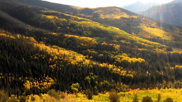 vidéos et rushes de deep colors of aspens in fall par drone in colorado deep colors of aspens in fall by drone in colorado deep colors of aspens in fall by drone in colorado deep colors - image contrastée