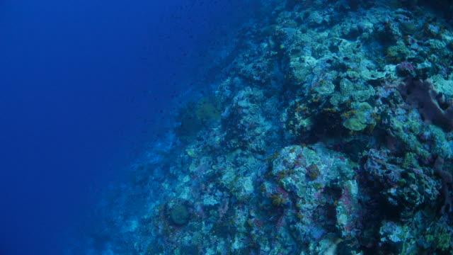vídeos de stock, filmes e b-roll de fundo de recifes de corais, mar tropical - deep sea diving