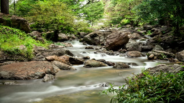 Deep Forest beautiful waterfall