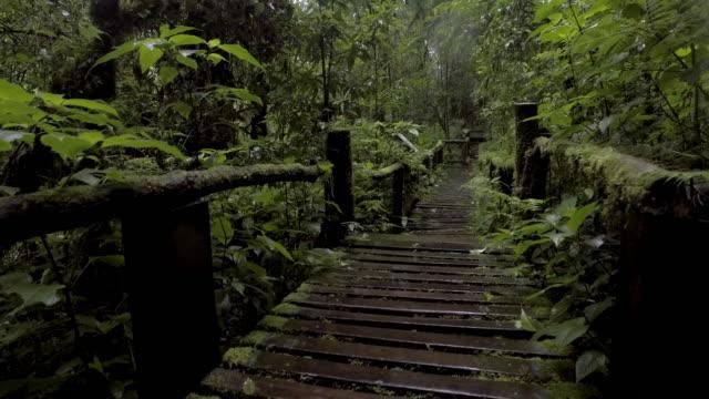 vidéos et rushes de forêt tropicale, de mousses et de jungle de la forêt profonde - fantaisie