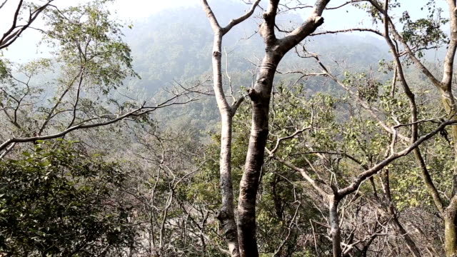 hd: deep forest - tropical tree stock videos & royalty-free footage