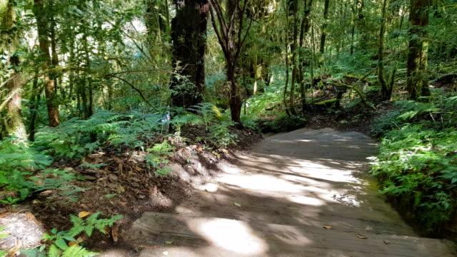 tiefer wald mit grünem moostuch große baumrinde - riesenmammutbaum stock-videos und b-roll-filmmaterial