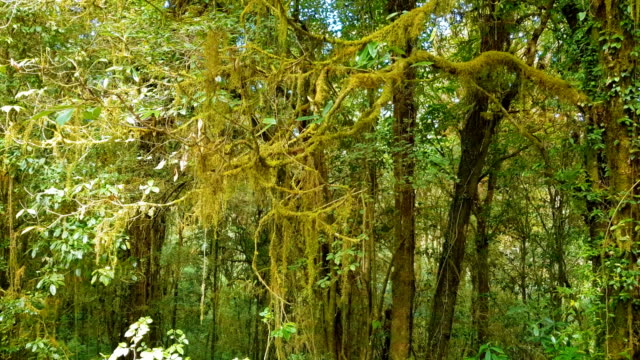 Deep forest with green moss on tree.