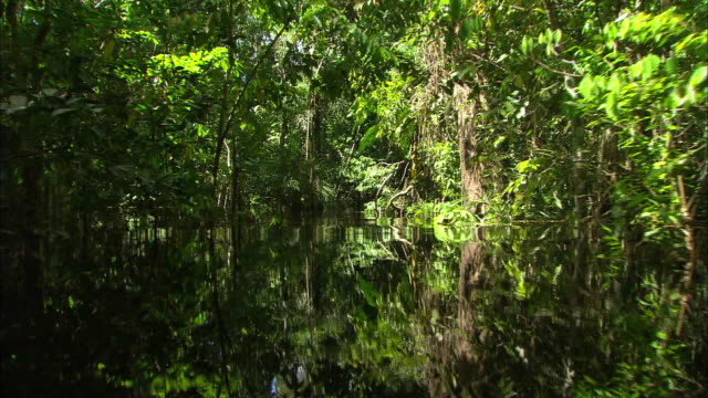 Deep inside Amazon rainforest and river