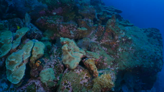 vidéos et rushes de récifs coralliens de mer profonde à darwin island, galapagos - îles galapagos