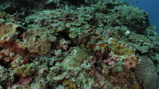 deep sea coral reef in orchid island, taiwan - scuba diver point of view stock videos & royalty-free footage