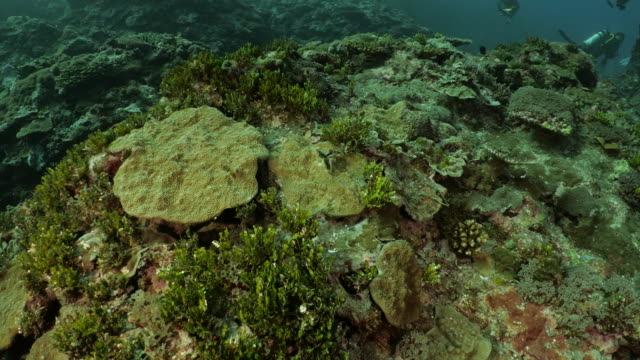 deep sea coral reef in taiwan - scuba diver point of view stock videos & royalty-free footage