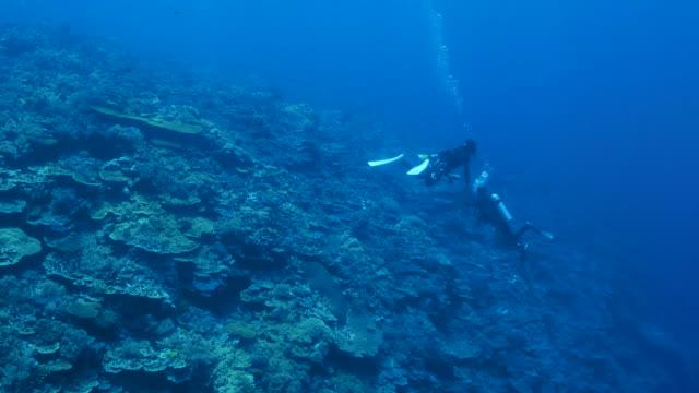 Diepzee koraalrif, Palau