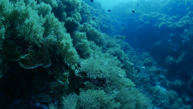 Deep sea coral reef underwater