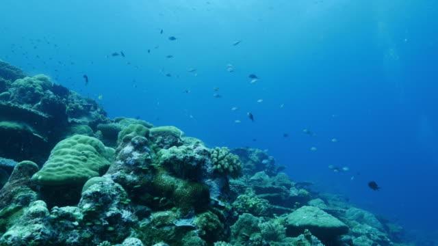 Diepzee koraalrif