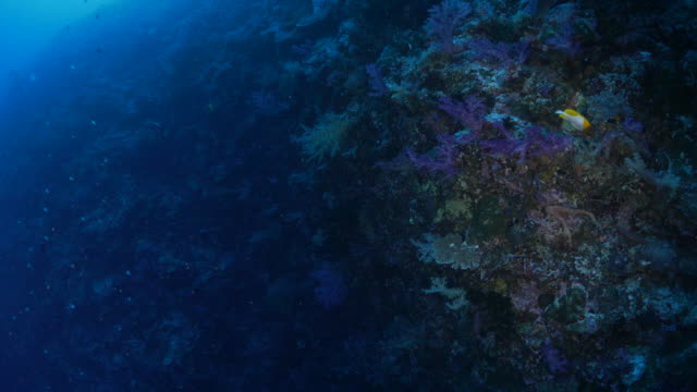 deep sea coral reef - seabed stock videos & royalty-free footage
