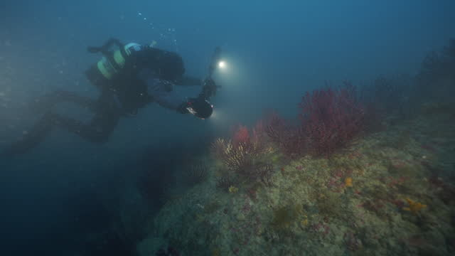 deep sea diver photographs beautiful coral reefs - underwater camera stock videos & royalty-free footage
