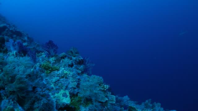 Deep sea reef, soft coral