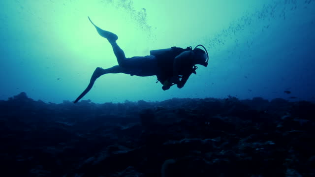 deep sea scuba diving in the pacific ocean - scuba diving stock videos & royalty-free footage