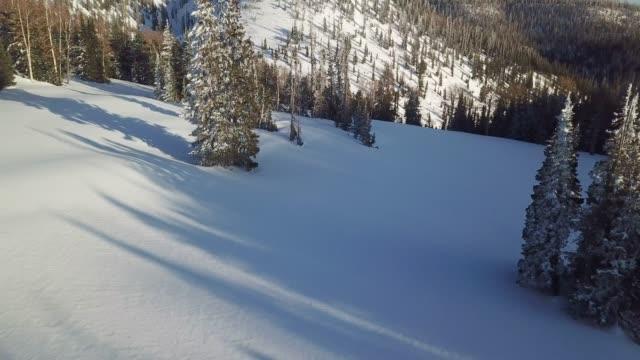 deep snow and pine trees - powder snow stock videos & royalty-free footage