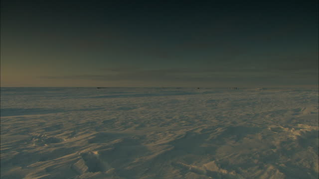 Deep snow covers the Alaskan tundra where a team of sled dogs take a break.