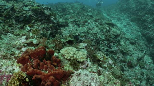 deep undersea coral reef at taiwan - philippine sea stock videos & royalty-free footage
