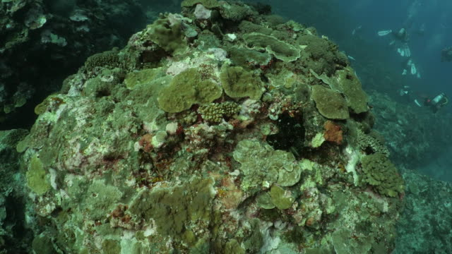 deep undersea coral reef at taiwan - scuba diver point of view stock videos & royalty-free footage