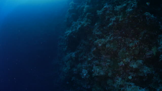 Deep undersea reef, dark sea
