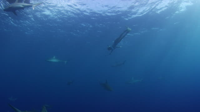 deep underwater shot looking up towards the surface into a school of sharks - kahuku stock videos & royalty-free footage