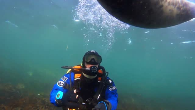 deep-sea diver from northumberland, england, made a new underwater pal on october 1 off the coast of the farne islands, an archipelago in the north... - aqualung diving equipment stock videos & royalty-free footage