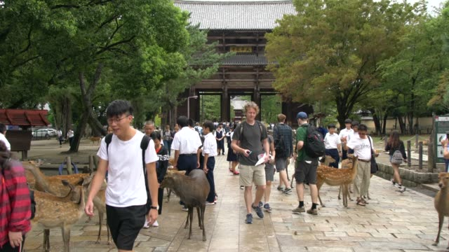 Deer And Tourists In Front Of Todai-Ji Temple In Nara, Japan