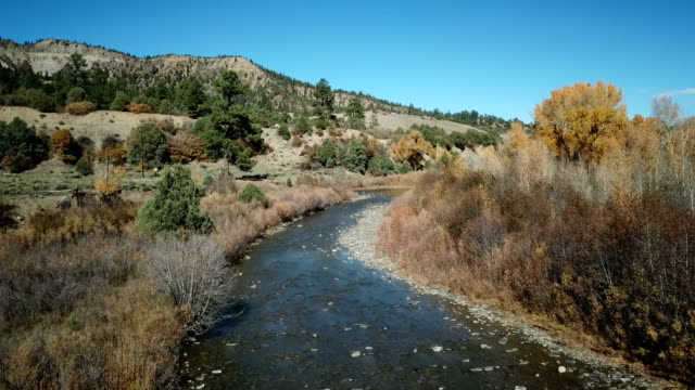 deer crossing river in colorado by drone - fawn stock videos & royalty-free footage