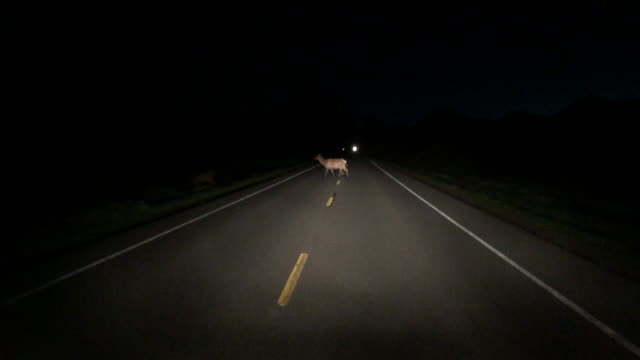Deer crossing road at night