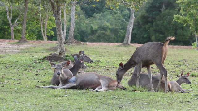 deer family rest in the field - deer family stock videos and b-roll footage