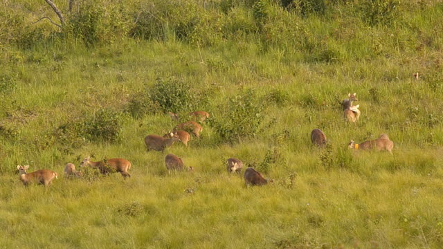 deer family - deer family stock videos and b-roll footage