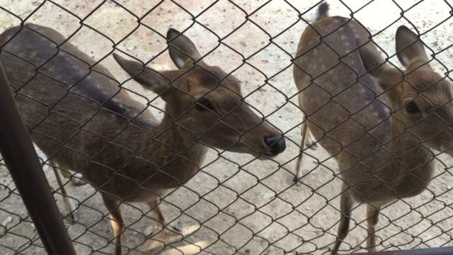deer feeding - doe stock videos & royalty-free footage
