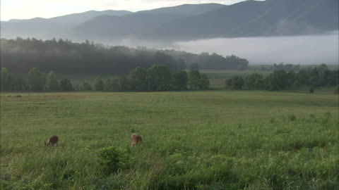 deer graze in a wide, grassy valley in the appalachian mountains. - valley stock videos & royalty-free footage