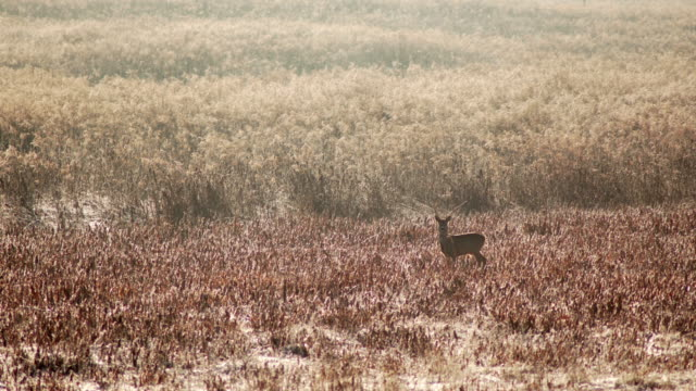 deer in the field - escaping stock videos & royalty-free footage