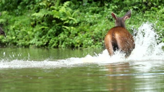 湖、自然、スローモーションで野生動物の鹿 - 遅い点の映像素材/bロール