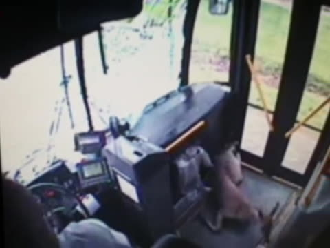 vidéos et rushes de a deer jumps through a city bus windshield and it's all caught on tape - captive animals