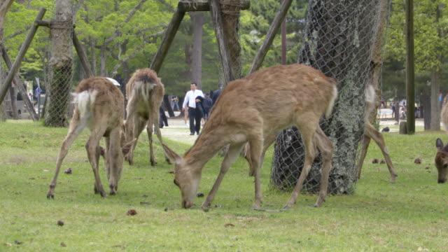 deer of nara park - wire mesh stock videos & royalty-free footage