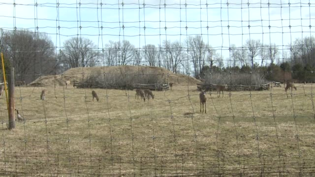 wxmi deer outside on march 25 2011 in grand rapids michigan - white tailed deer stock videos & royalty-free footage