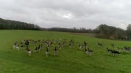 Deer running away from drone in Denmark