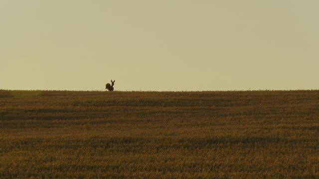 HD: Deer Running In The Field