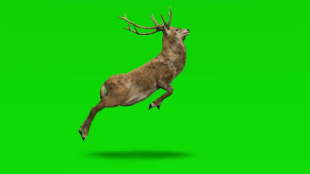 deer running on green screen. the concept of animal, wildlife, games, back to school, 3d animation, short video, film, cartoon, organic, chroma key, character animation, design element, loopable - deer stock videos & royalty-free footage