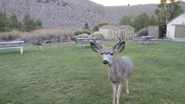 Deer Saying Hello