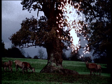 Deer scamper as lightning bolt hits tree branch breaks off and tree is set on fire