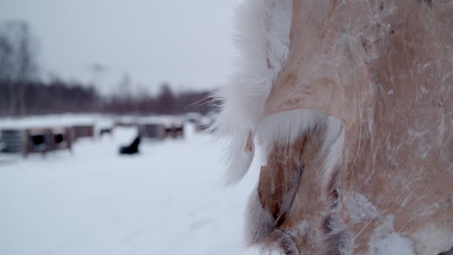 slo mo deer skin in snow - frost stock videos & royalty-free footage