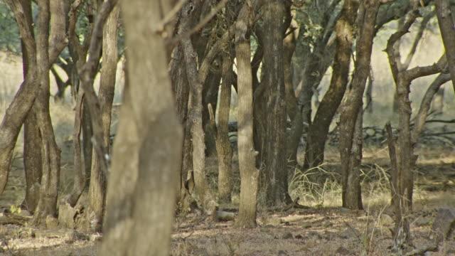 deer - fawn stock videos & royalty-free footage