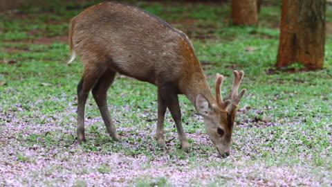 vídeos de stock, filmes e b-roll de deer - corça