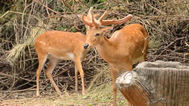 deer. - hooved animal stock videos & royalty-free footage